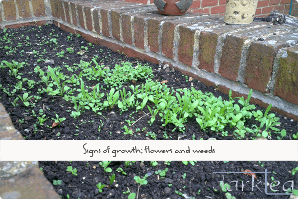 seedlings growing in front of a brick wall