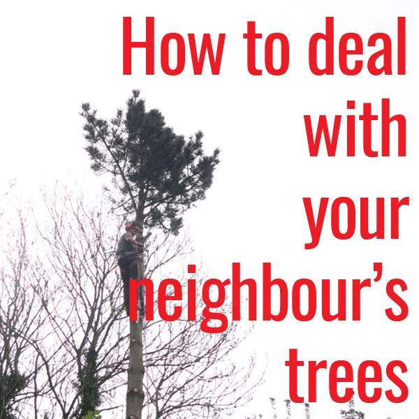 neighbours tree